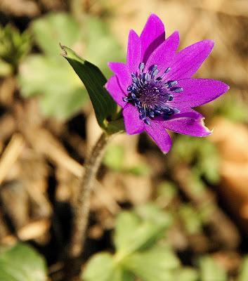 Flower Power di enricavecchi