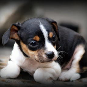 Woof You by Yvette O Beirne - Novices Only Pets ( woof, sad, puppy, dog, lonely, alone )