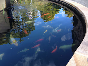Photo: Day 12: Fish Pond on campus