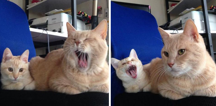 Kediler ve sevimli yavruları