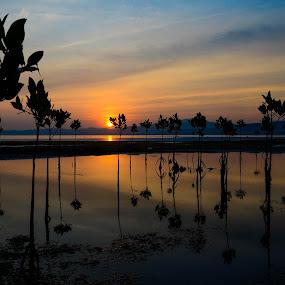 Here comes the sun by Jan Robin - Landscapes Sunsets & Sunrises ( reflection, seashore, silhouette, sunrise, mangrove )