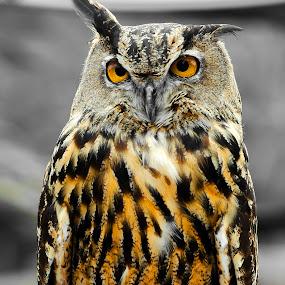 Judge by Christian Wicklein - Animals Birds