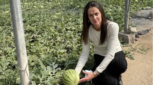 La Junta ya vigila para evitar que sandía y melón se corten verdes