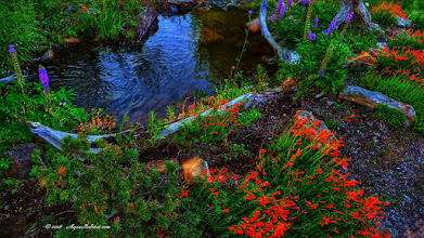 Photo: Natural water feature pond in a meadow of native wildflowers