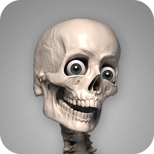 Skelly: Poseable Anatomy Model - Apps on Google Play