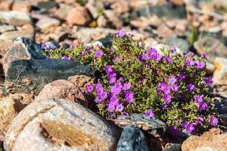 Photo: Pretty wildflowers fending off fall; Plaza Blanca, Abiquiu, New Mexico