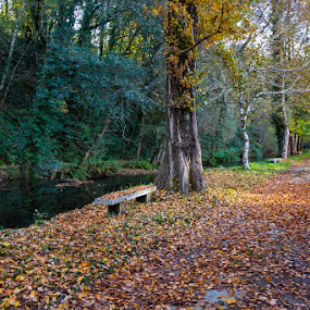 Otoño en Samos by Jose María Gómez Brocos - City,  Street & Park  City Parks ( tree, park, autumn, samos, bank, forest, leaf, leaves )
