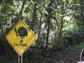 Photo: The second day in Cairns, we decided to rent a car and drive up the coast to Cape Tribulation.  This is the only place in Australia where you will see these signs.  Be careful! Cassowary Crossing!