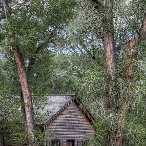 Tucked Away by Tracy Lynn Hart - Buildings & Architecture Public & Historical ( home, vacation, montana, shack, ghost town, trees, haunted, house, place, homestead, abandoned )