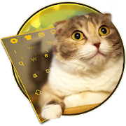 3D Live chubby Cute Kitty Keyboard