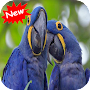 Macaw APK icon