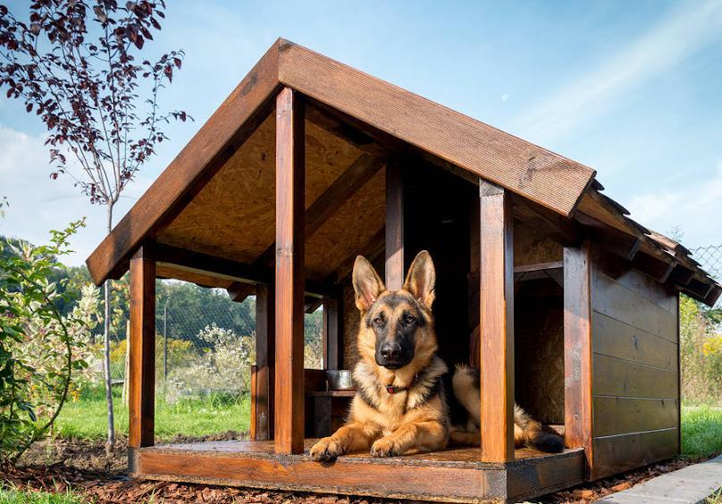 Pies w budzie z dodatkowym przedsionkiem