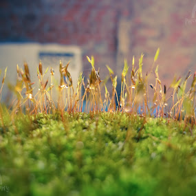 by Arun Aravind - Nature Up Close Leaves & Grasses