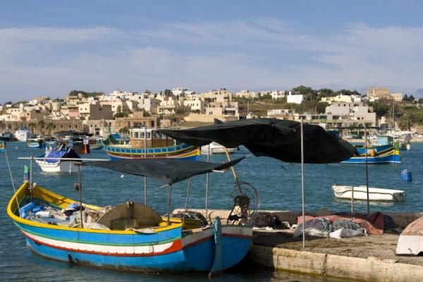 Pesca Maltese di Patch