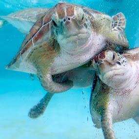 by Wendy Schultz - Animals Sea Creatures