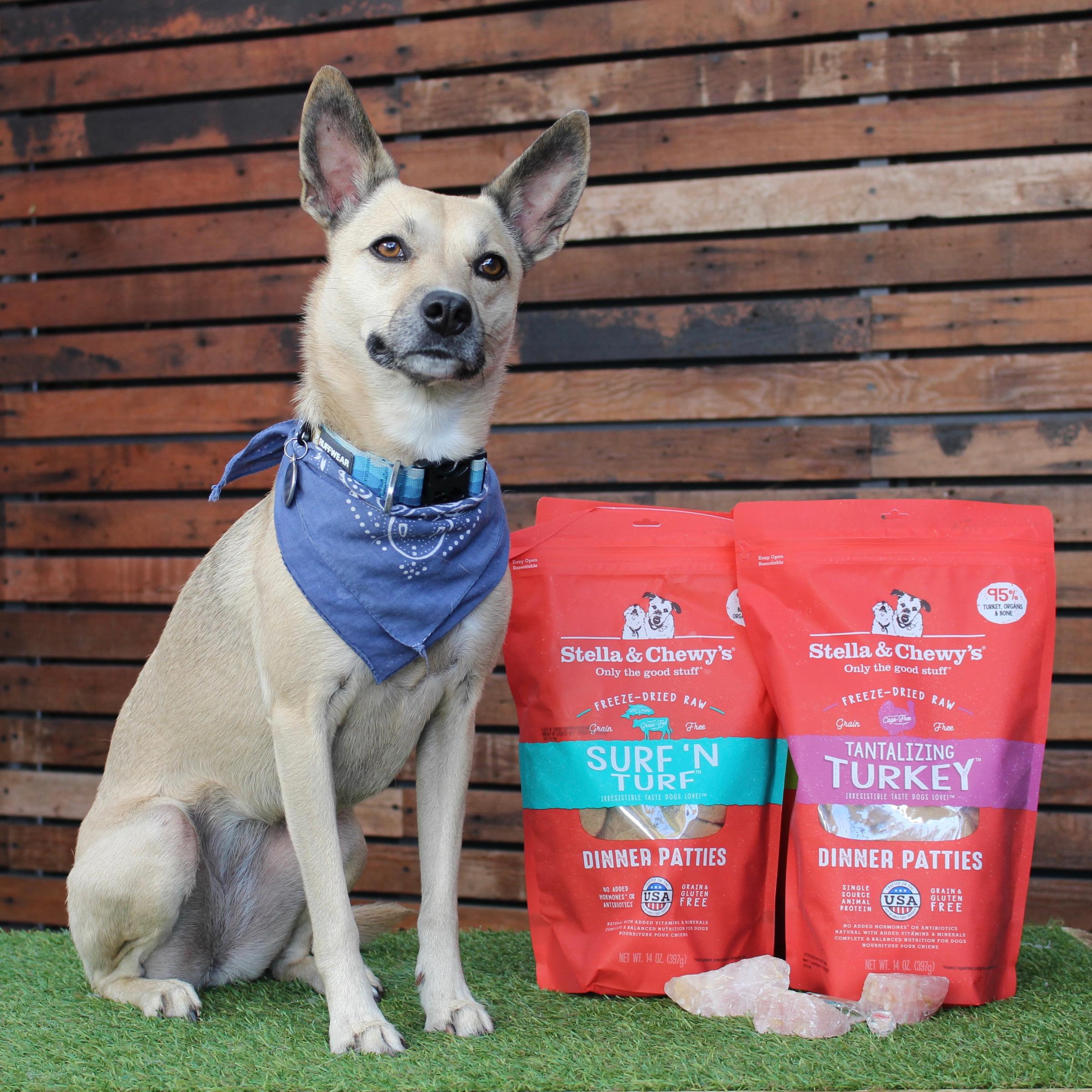 Dog nutrition consultation