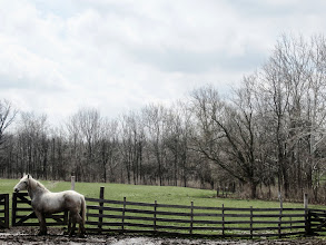 Photo: Grey horse on a beautiful grey spring day at Carriage Hill Metropark in Dayton, Ohio.