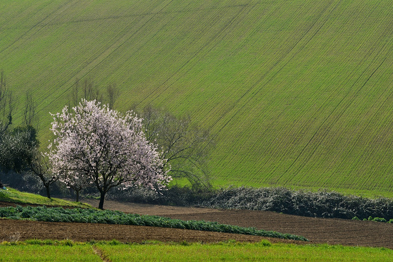 accenni di primavera di Luporosso