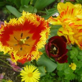 Spring flowers by Helena Moravusova - Flowers Flower Gardens ( flowers )