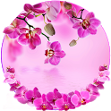 Orchid Spring Flowers Theme icon