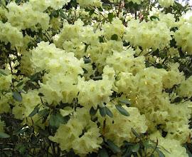 Photo: Yellow mass