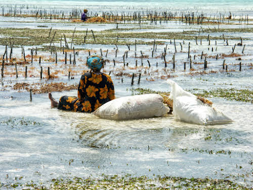Things to Do in Zanzibar Stone Town and Beyond // Women by the seaweed farms in Jambiani