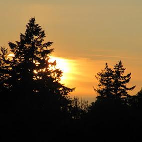 Crystal Lake Sunset by Che Dean - City,  Street & Park  Skylines ( oregon, park, corvallis, crystal lake )