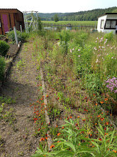 Photo: Der Garten meiner Grosseltern. Nach ca 3 Jahren ist dieser nun verwildert. Nichts mehr zu erkennen von den frueheren Erdbeerbeeten. Demnaechst muss auch hier aufgeraeumt werden...