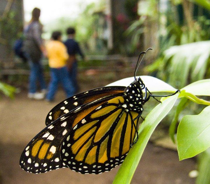 La farfalla di PietroP