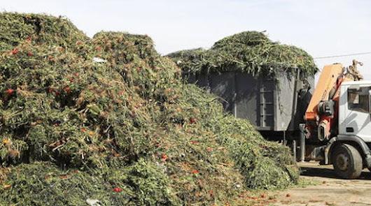 Los Cursos de Verano de la UAL abordarán la reutilización de residuos agrícolas