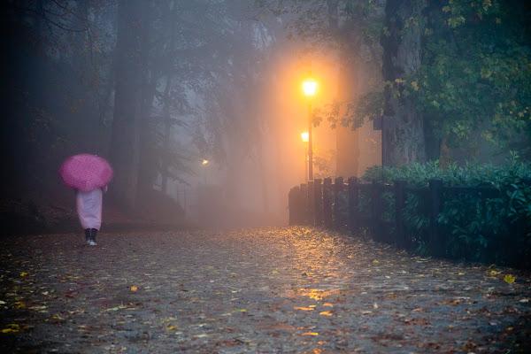 La pioggia nel bosco di E l i s a E n n E