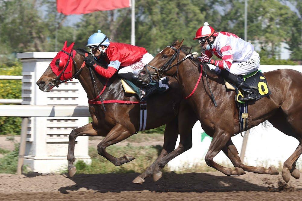 El Cariñoso (Vision And Verse) se quedó con la victoria en Handicap (1000m-Arena-CHS). - Staff ElTurf.com