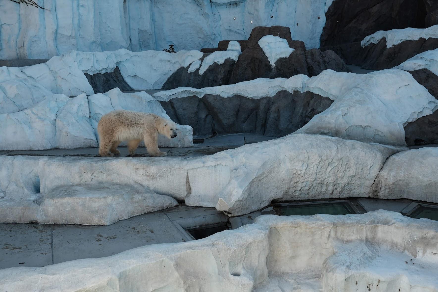 XF23㎜で撮った上野動物園の白熊