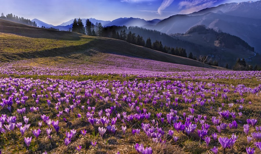 Flowering carpet by Ana France - Landscapes Prairies, Meadows & Fields