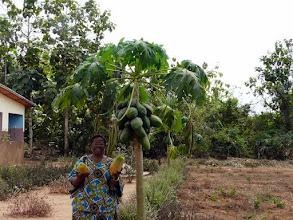 Photo: les papayes excellentes !