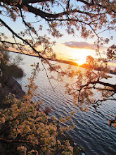 Photo: Sunset on a lake among pear blossoms at Eastwood Park in Dayton, Ohio.
