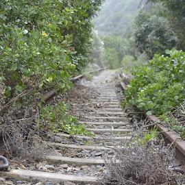 spoor na iewers by Lana Kirstein - Transportation Railway Tracks ( bome grasse treinspoor klippe plante takke )