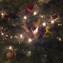 Photo: A closer look at the tree.