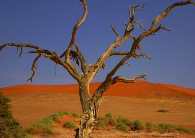 Deserto di coco1971