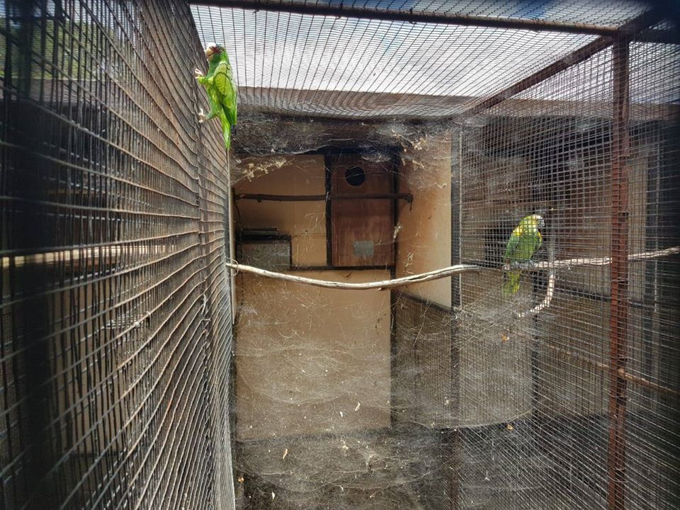 Breeding official quits after SPCA finds '150 dead parrots' at his home - TimesLIVE