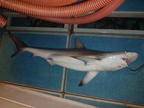 Photo:  そして、こんこんと説教して・・・あと3発ぐらい頭にゲンコツ入れて逃がしました!「二度と釣った魚、横どりすんなよー!」