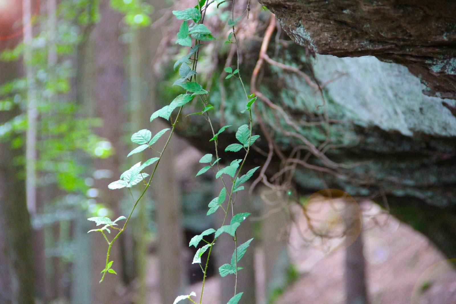 Eindrucksvolle Natur findet man bei Wanderungen im Nördlichen Schwarzwald