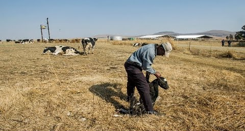 Staatskaping: Gupta-bondgenoot was 'van diep hulp' in die opstel van die suiwelprojek van Estina - SowetanLIVE Sunday World