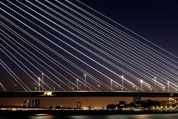 Rotterdam di faranfaluca