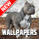 Download Pitbull Wallpapers HD For PC Windows and Mac