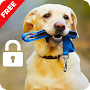 Cute Dogs Labrador HD App Lock Pin Password APK icon
