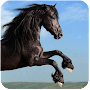 Horse Racing Tips Australia APK icon