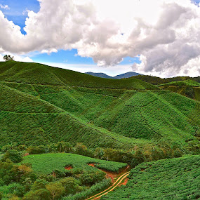Cameron Highland by Alvin Cheah - Landscapes Mountains & Hills ( pwcpaths )