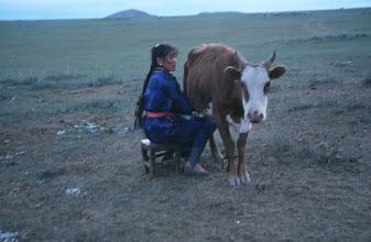 Photo: 03185 ブルド/ハスバータルイ家/牛の乳搾り