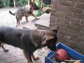 Photo: Aiki wil de rode bal